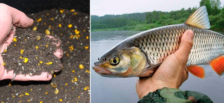 рыба голавль прикормка