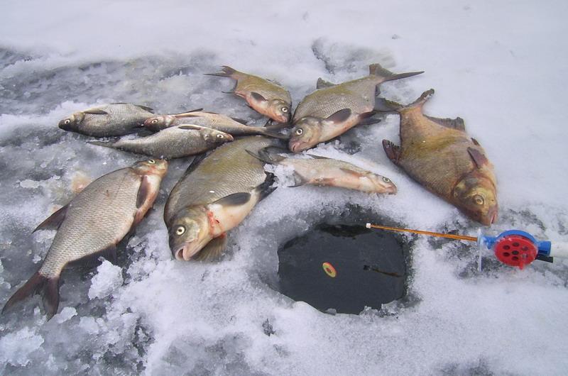 как ловить зимой