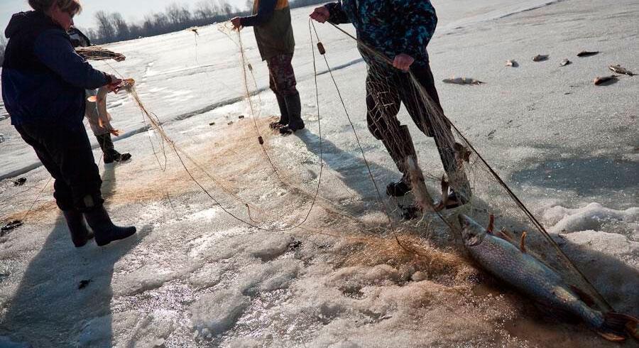 ловля рыбы сетями на прудах