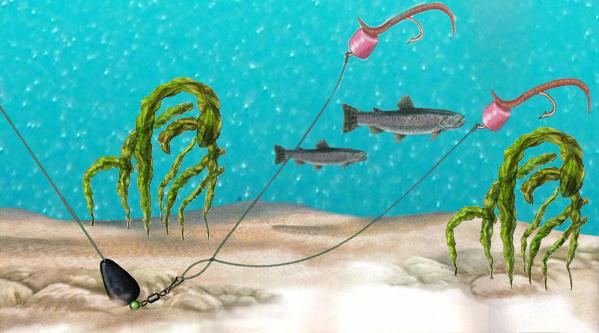 Снасти для ловли форели: на спиннинг, нахлыстом, на поплавок и донку, на платниках