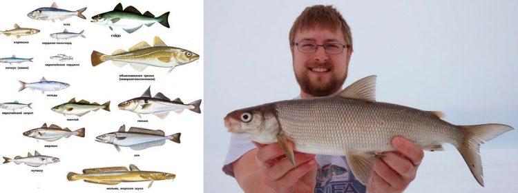 Виды белой рыбы