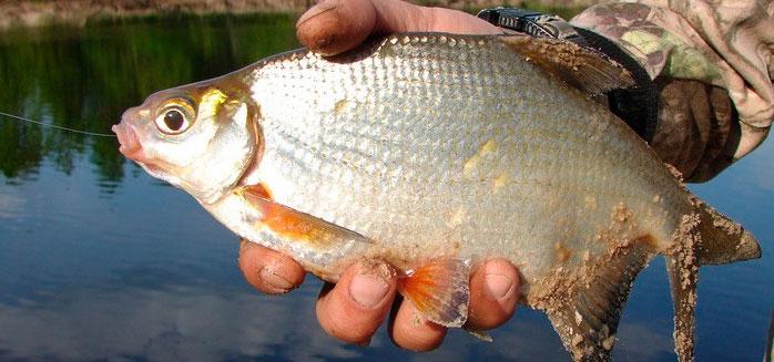 когда ловится рыба весной