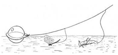 Ловля голавля на без поплавочную оснастку
