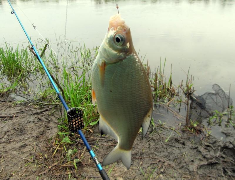 на что клюет рыба летом