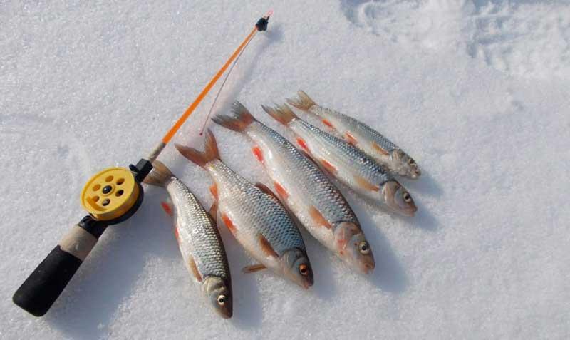 рыболовная снасть джокер