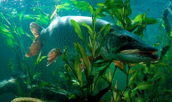 при каком давлении клюет рыба карп