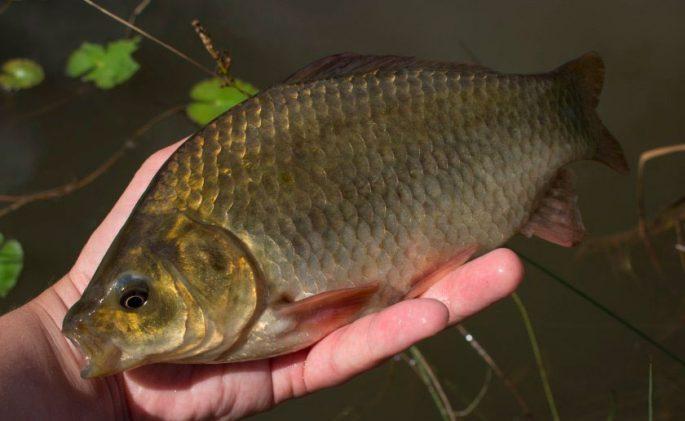 Секреты рыбалки на карася