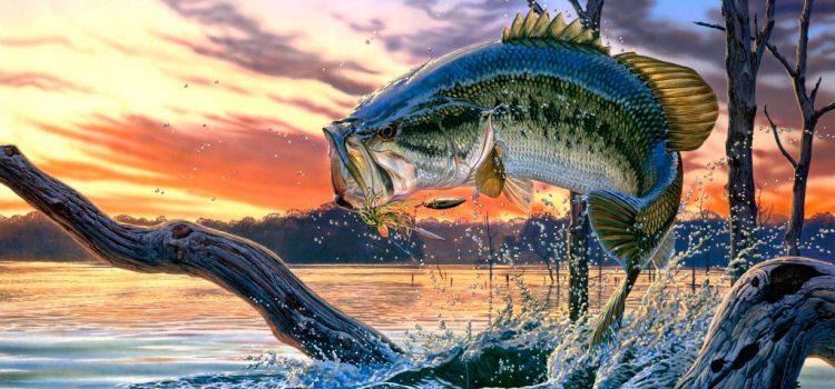 Прогноз клева рыбы от времени года