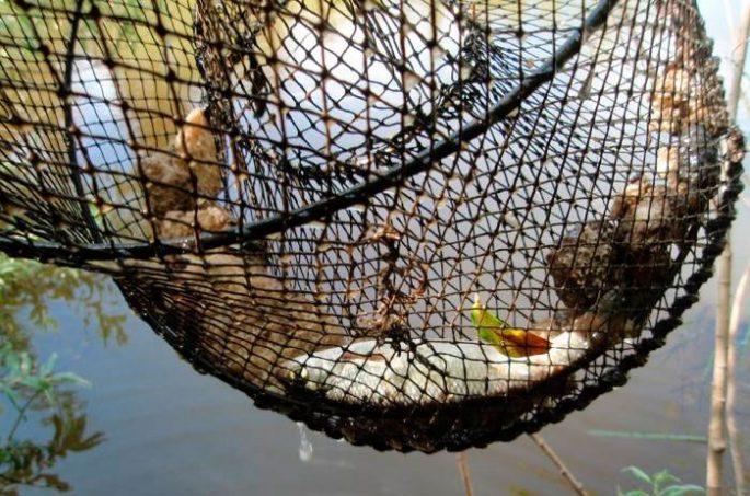 приманка для морды для ловли рыбы