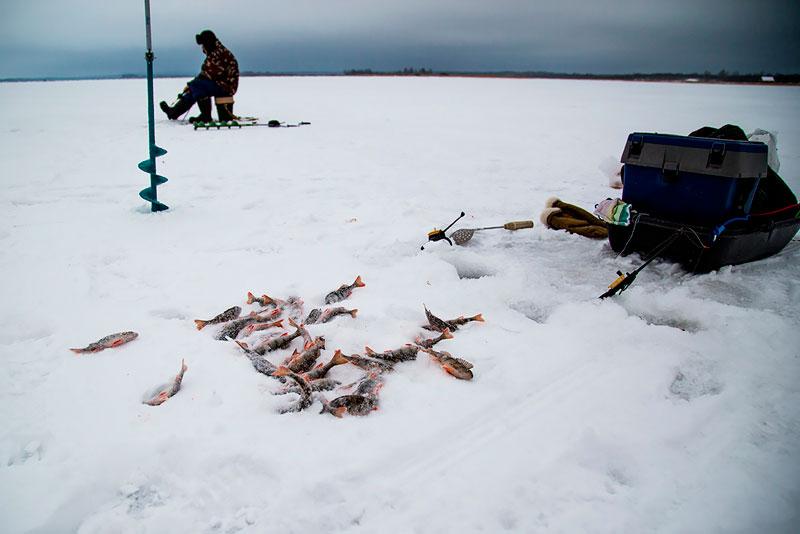 на что лучше клюет рыба налим зимой