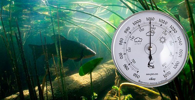 при каком давлении клюет рыба в иркутске