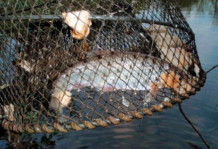 из чего сделать морду для ловли рыбы