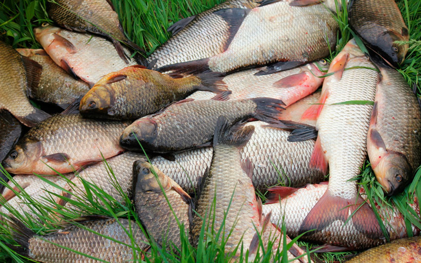 при каком давлении лучше клюет рыба карась