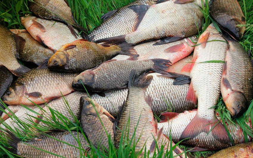 при каком давлении клюет рыба летом карп