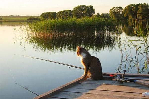 какая рыба клюет в июне на дону