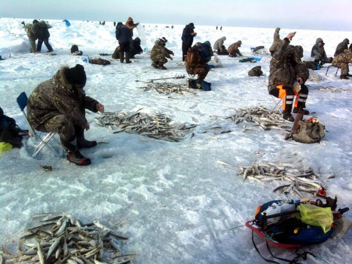 Ловля корюшки в Санкт-Петербурге