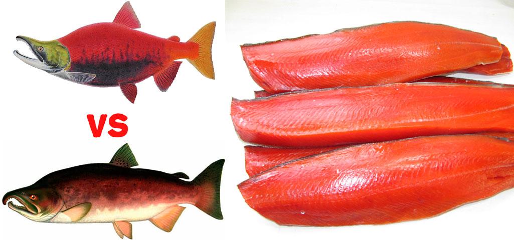 фото рыба нерка
