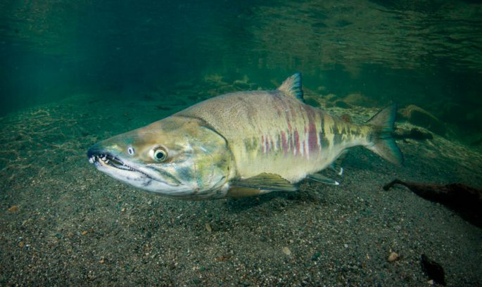Размер и вес рыбы