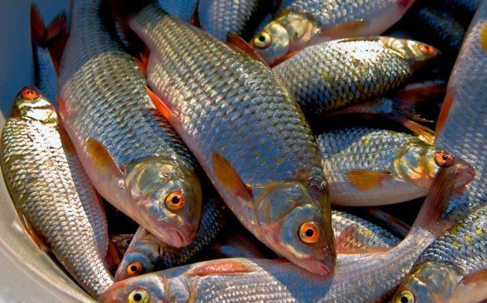 состав активатора клева fishhungry