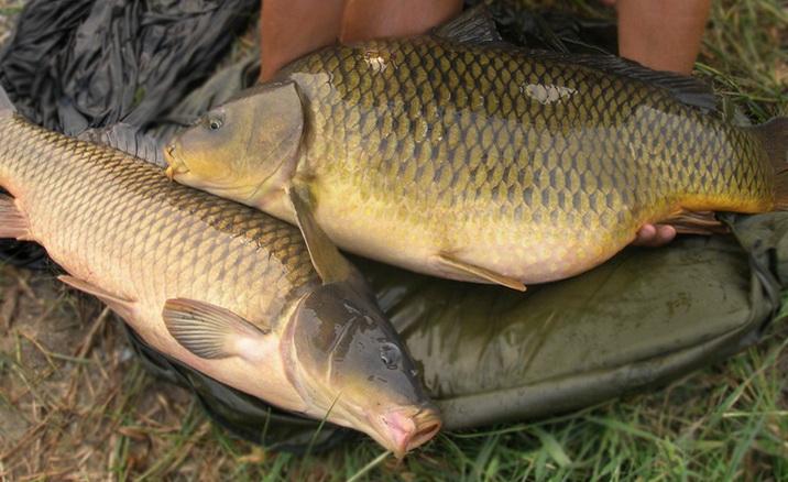 Приманка для рыбы супер клев своими руками карп