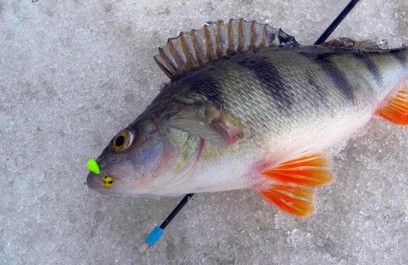 как сегодня клюет рыба