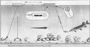 рыбалка на ямале ловим щук