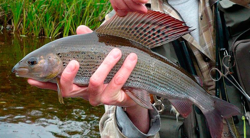 Рыбалка во владимирской области на исихре