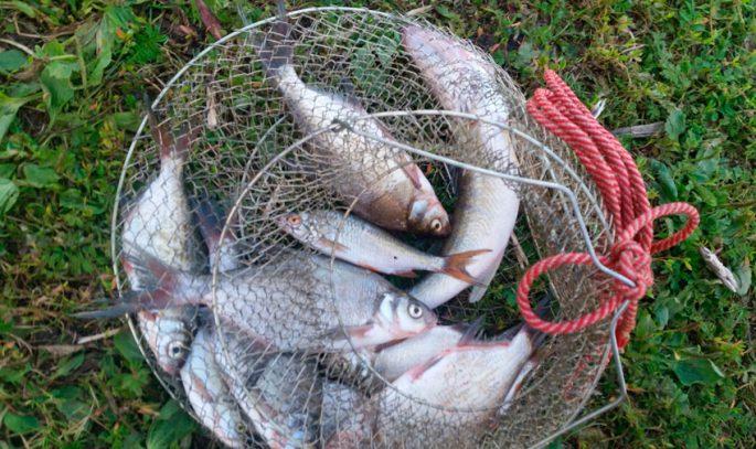 Какая рыба ловится