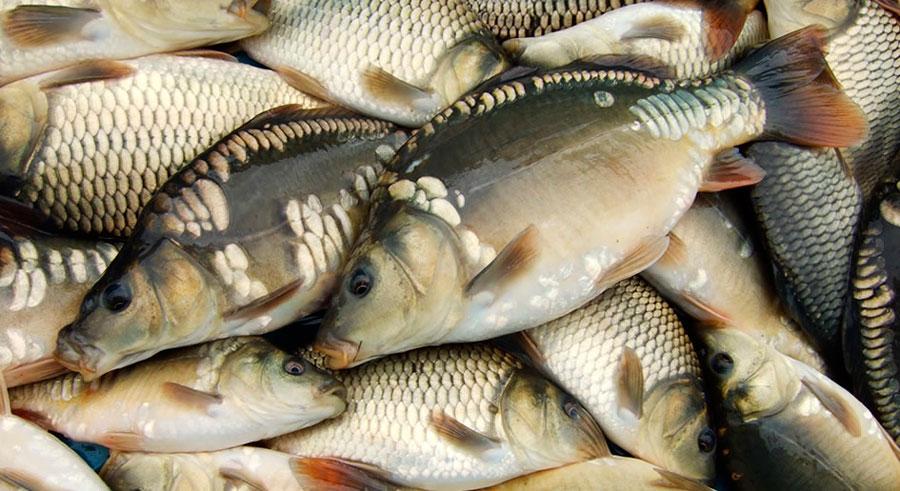 рыба на зимней рыбалке