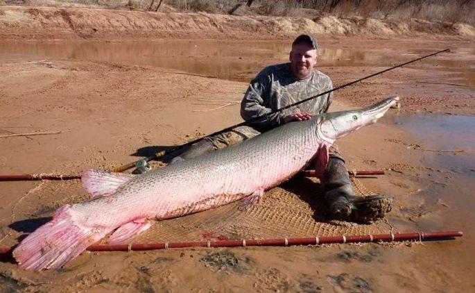 Рыбалка на аллигаторовую щуку