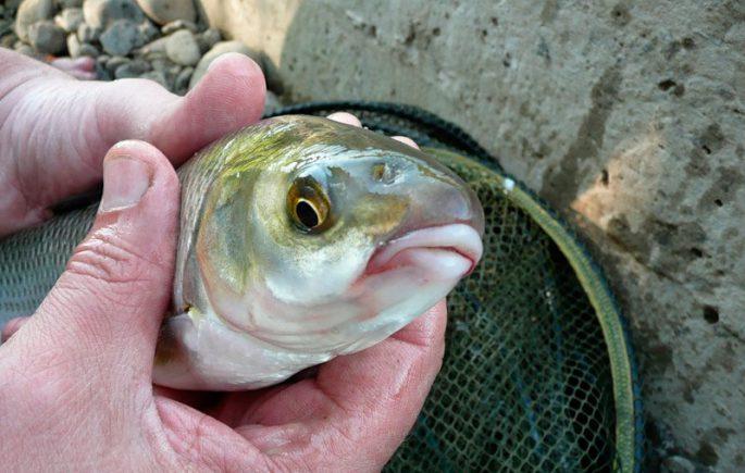 Рыбалка на вырезуба