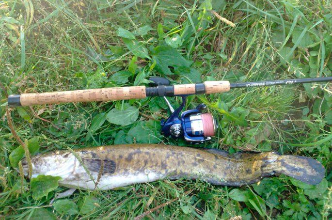 Снасти для ловли налима осенью