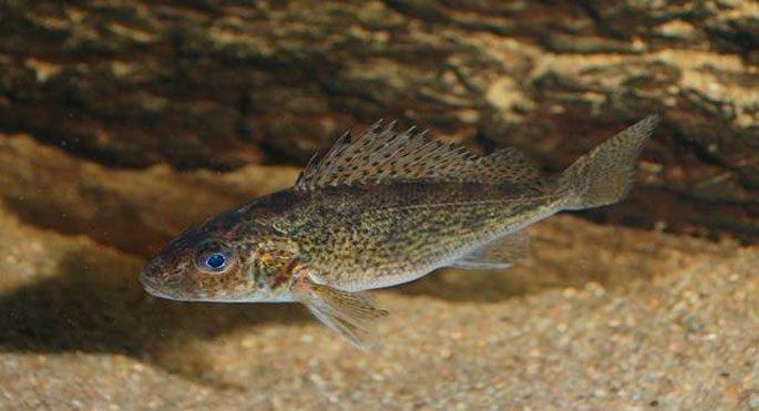 какая рыба ловится на спиннинг в ноябре